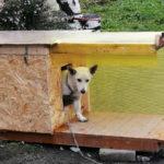 Комфортная будка для собаки утепленная , этапы сборки зимней конуры с фото и видео